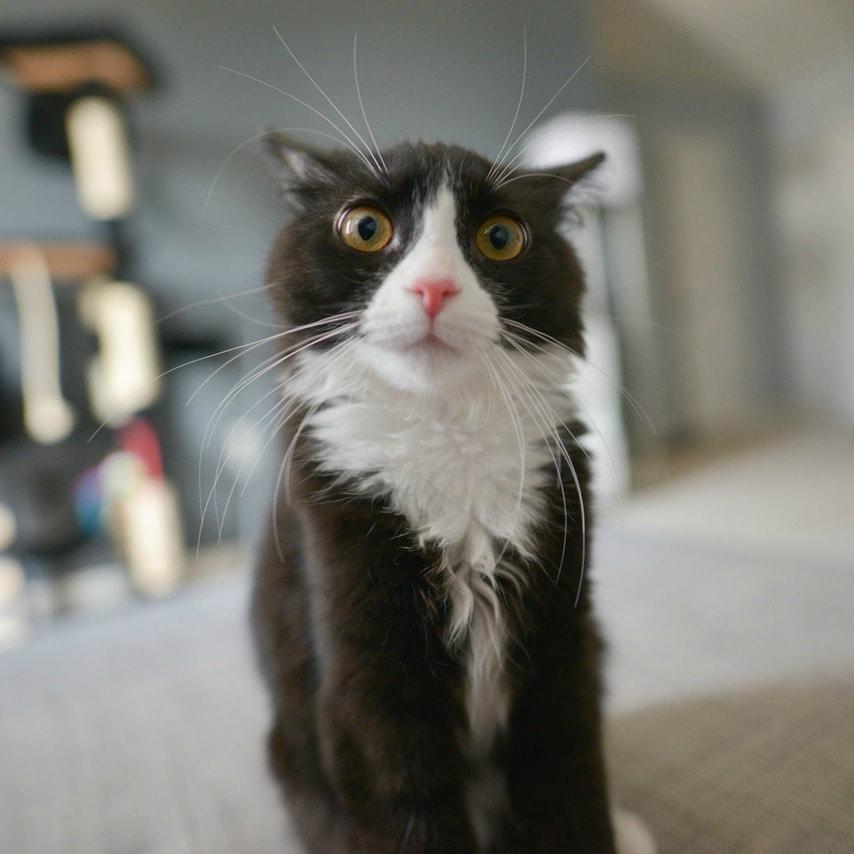 Cat Won T Eat Medicated Food