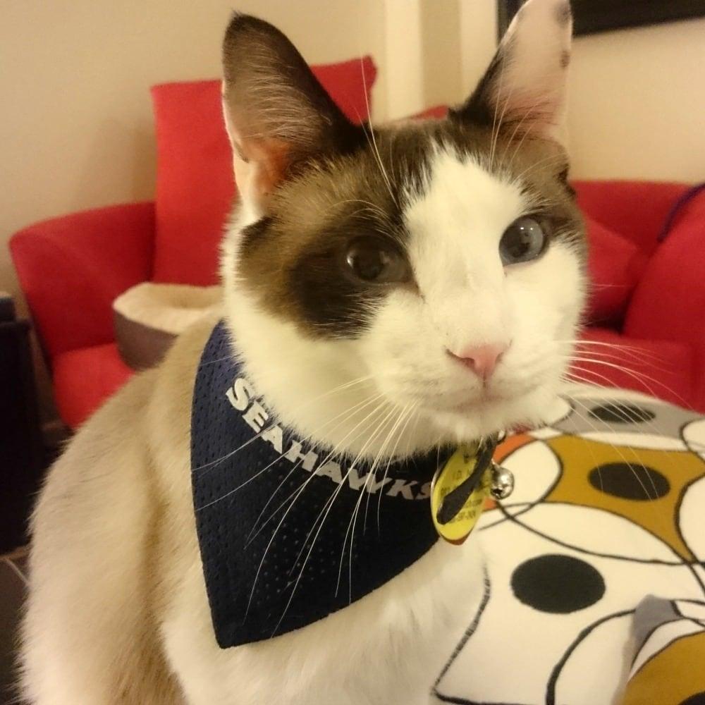 Cat of the Month, June 2017: Mr  Bojangles - Rainier