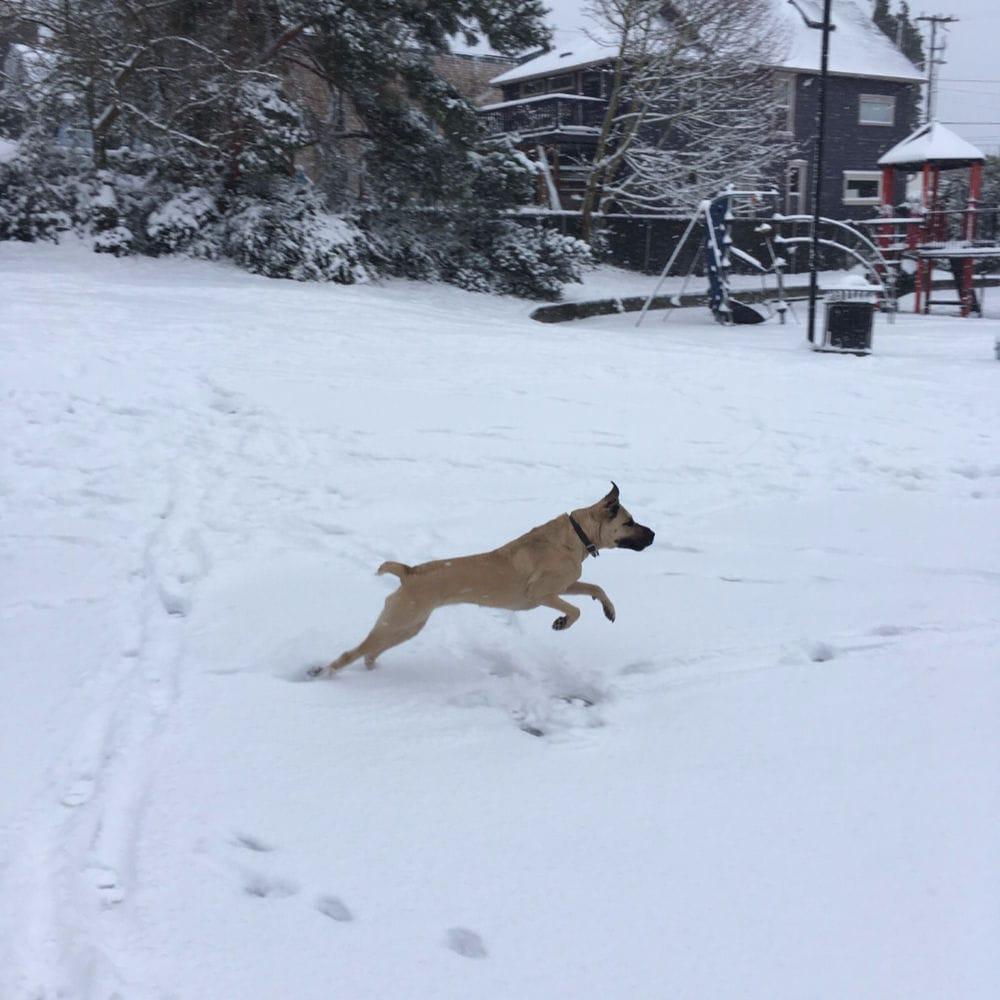 Rainier Veterinary Hospital Dog of the Month, September 2019: Sophie